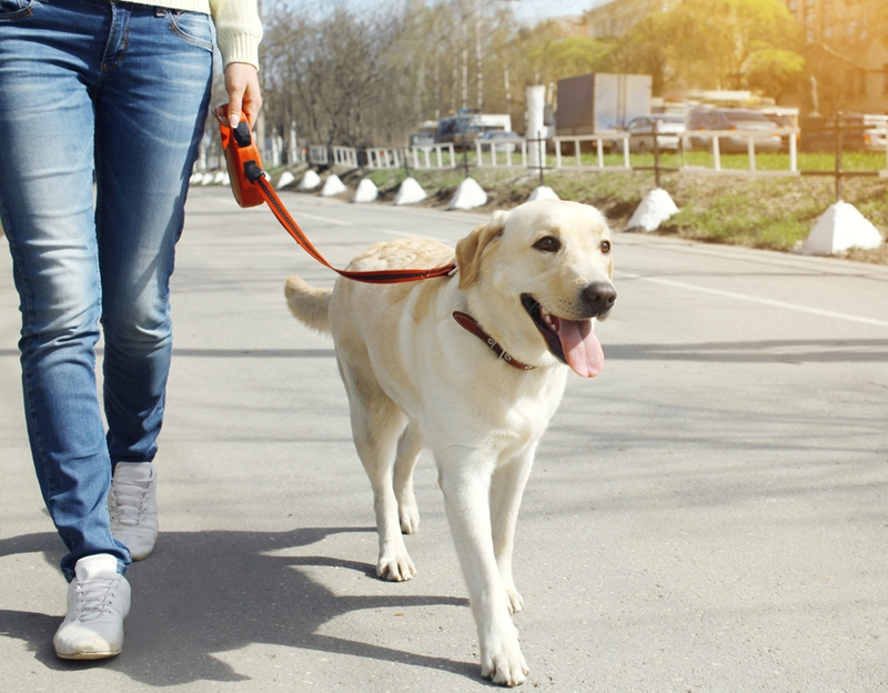 Dog owners have immense responsibility, especially with respect to the the safety of other pedestrians and animals when they take their pets outside.