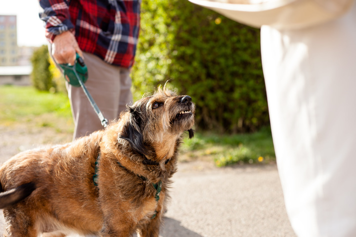 Animal experts and veterinarians say that the best way to prevent dog bites from happening is through the proper training methods.