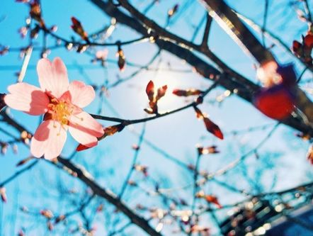 With spring in full swing, it can be savvy to incorporate it into your marketing plan.