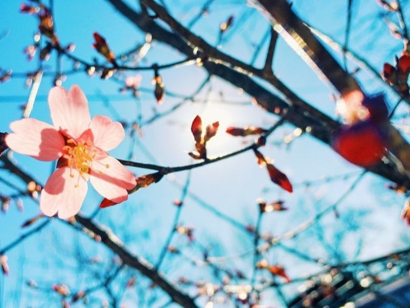 3 Spring-Themed Marketing Tips