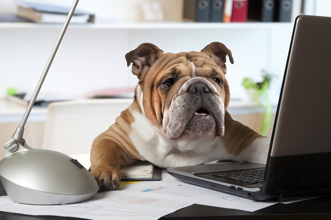 "Will ""Take Your Dog to Work Day"" Come Back to Bite Your Company?"