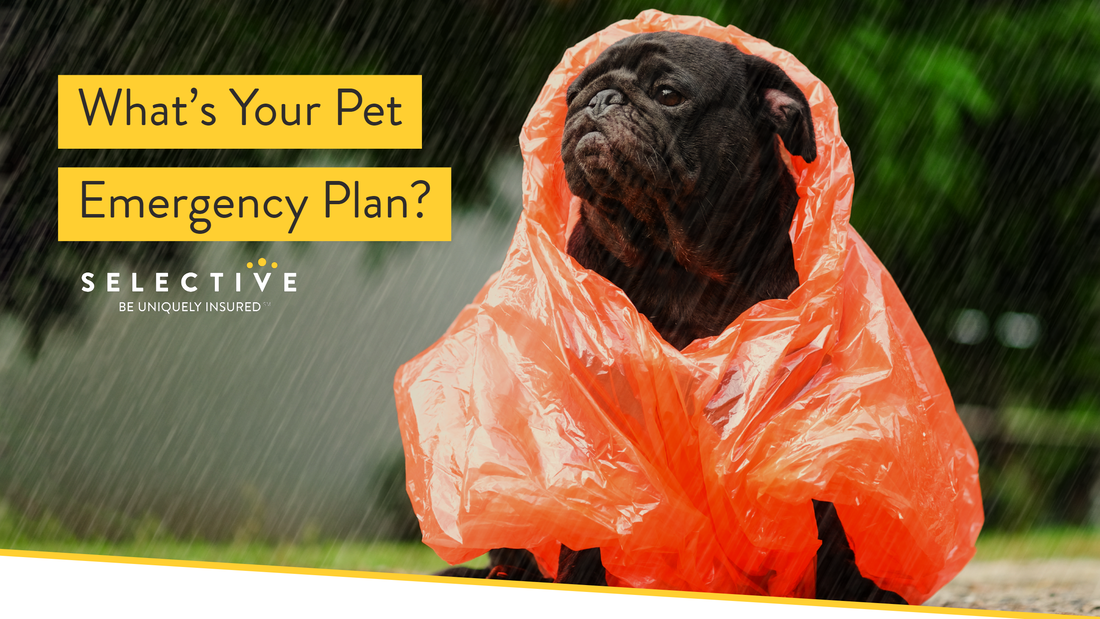 To help you be prepared, here is a quick guide to creating a pet emergency plan.