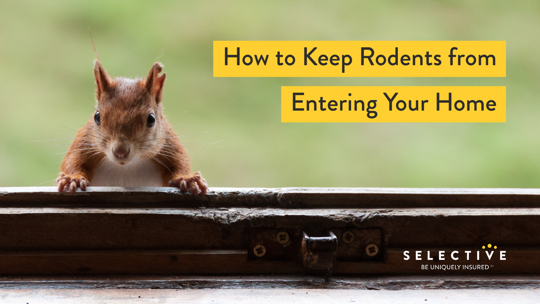 How to Keep Rodents from Entering Your Home