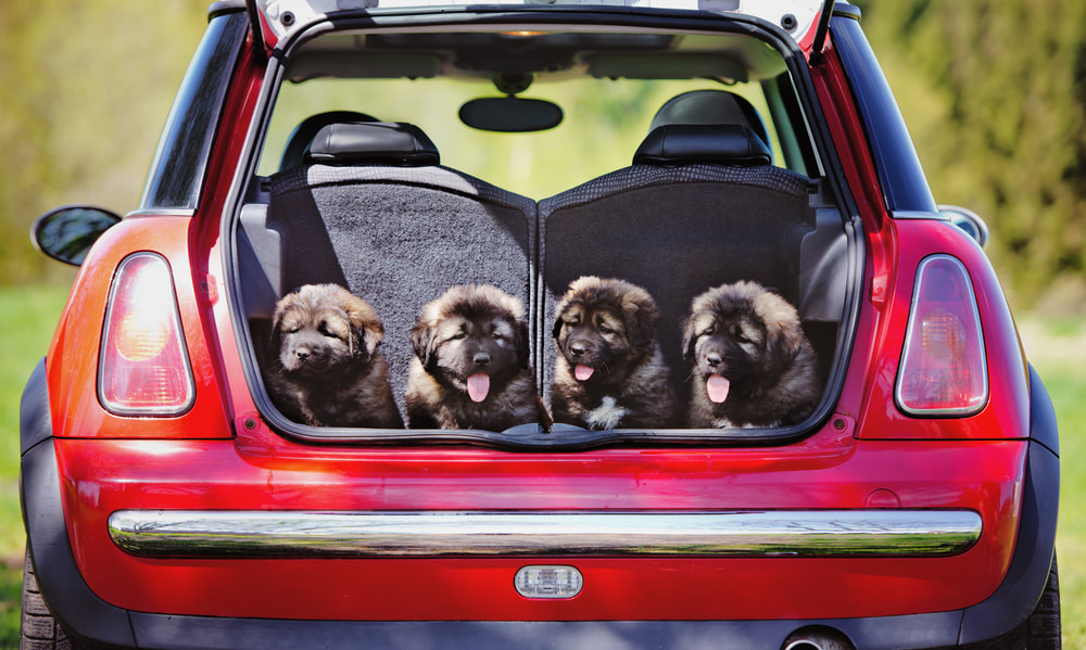 Traveling Safely with a Pet in a Car: 5 Things to Consider